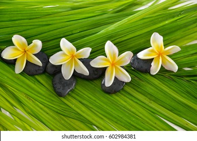 Black stones with four frangipani and green palm