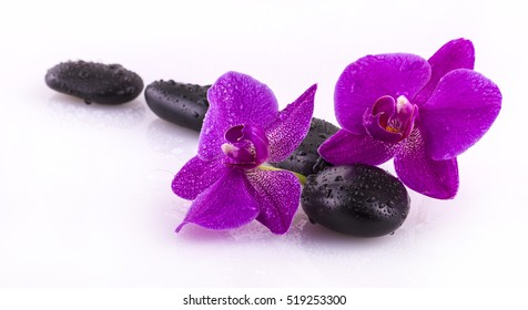 black stones and orchid flower with drops on white background