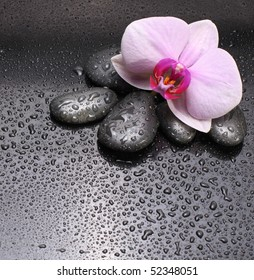 black stones and orchid with water drops