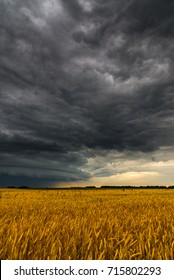 Black storm cloud above the wheat field