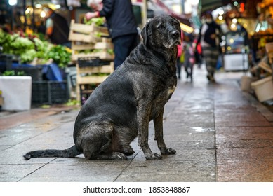 black stray dog on the street