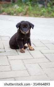 Black stray puppy sitting looking to camera