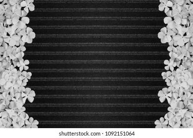 black stripe pattern background with delicate flower frames