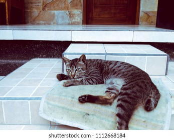 Black Striped Cat Feel Sleepy Relax On The Floor