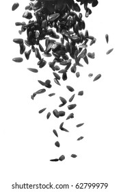 black sunflower seeds falling down on white background