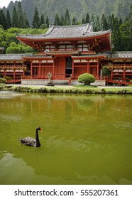 a black swan in front of the Byodo-In Temple, Oahu, Hawaii.