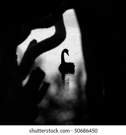 black swan in a moody silhouette pose through the trees black and white square composure