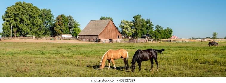Black and tan horse on an Idaho farm with a wooden barn