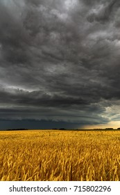 Black thunderstorm cloud above the wheat field