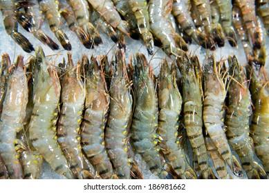 black tiger prawns