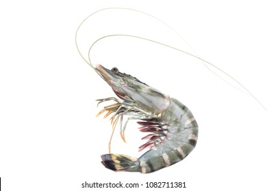 Black tiger shrimp on white background isolated with clipping path