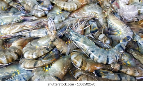 Black Tiger Shrimp for sale in Bangkok Fresh Market. Tiger prawn  (Penaeus monodon)
