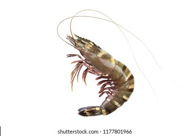 Black tiger shrimp, white background isolated with clipping path.