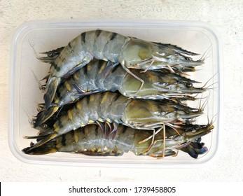 Black tiger shrimp/fresh prawn  is on sale in the market.