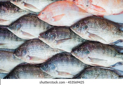 Black Tilapia or Tilapia and Red Tilapia for background
