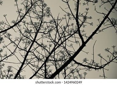Black tree branches with leaves natural photo