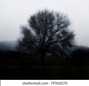 Black tree in the fog