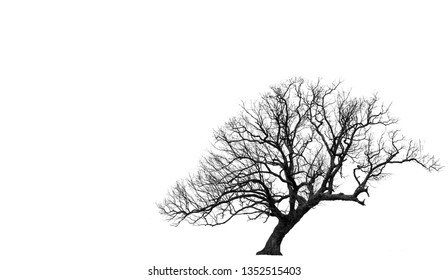 Black Tree Isolated on White Background