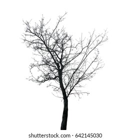 Black tree silhouette without leaves on a white background. Isolated