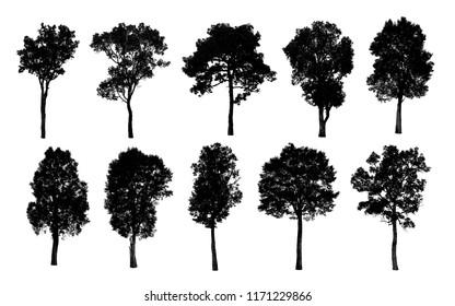 Black tree silhouettes on white background , silhouette of trees.