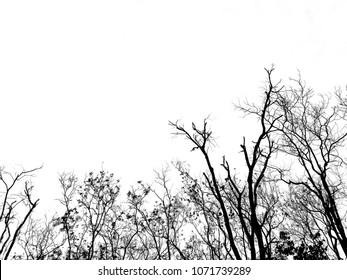 Black tree and white sky in silhouette style, sadness and hopeless concept.