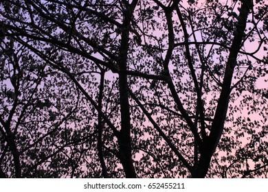 Black Trees sky