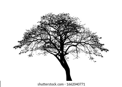 Black tree,Tree silhouette on isolated on white background
