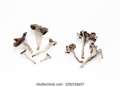 Black Trumpet Mushroom. black chanterelle . Flatlay