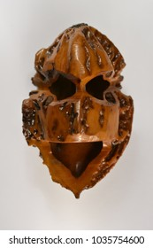 Black Walnut hand carved shell of mask face.  Macro photography to show all the details.  Plain white background.