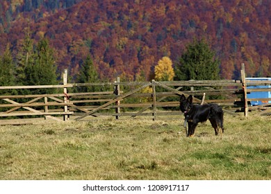black watchdog in mountain