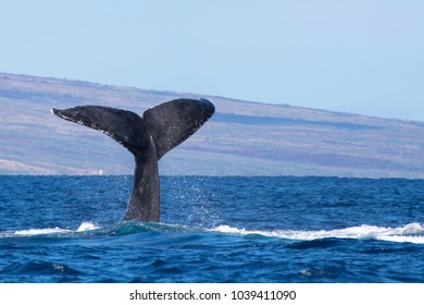 Black Whale Tail Diving Into Ocean with Island Background