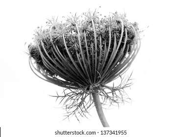 Black and white abstract flower background