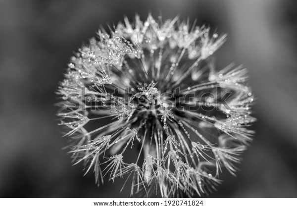 black-white-abstract-macro-background-60