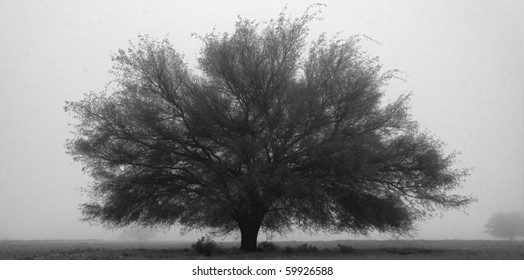 Black and white abstract of tree in fog