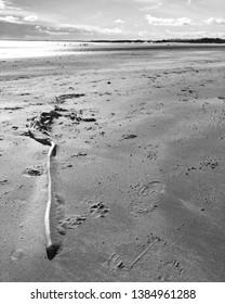 Black and White Alnmouth Beach