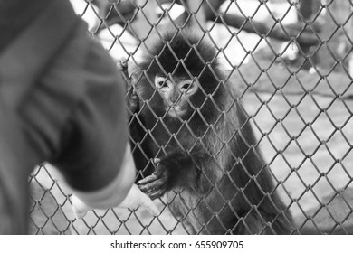 black and white animals monkey in cage