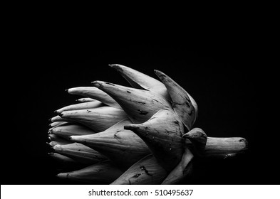 Black and white artichoke