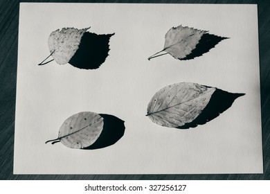 black and white. autumn leaves lie on paper, casting sharp shadows