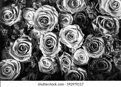 Black and white background of flowers roses.