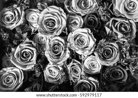 Black White Background Flowers Roses Stock Photo Edit Now