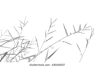 Black and white bamboo branch.