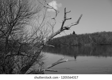 A black and white of a bare branches of a tree with a part of the waikato river.  Taken in New Zealand.