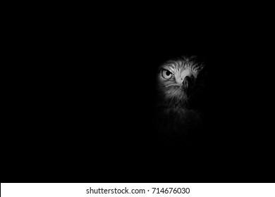 Black white bird photo. Dark background. Art in nature.