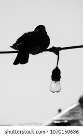 Black and white bird silhouette perched on wire with light bulb.