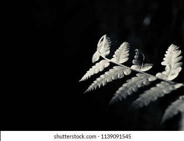Black and white blurry leaves of a plant isolated unique photograph