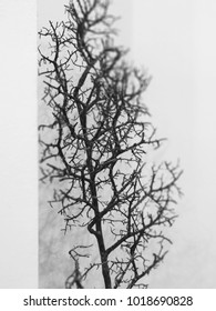 black and white branch