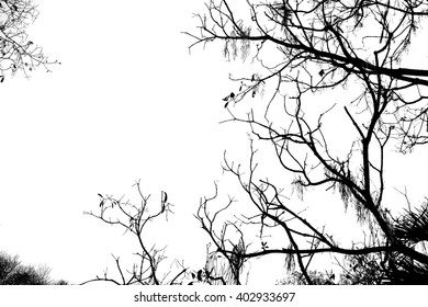 Black and white branch background