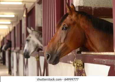 black white and brown Horses in their stable