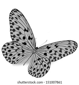 Black and white butterfly isolated on white background