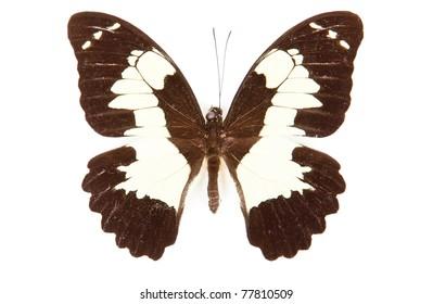 Mariposas Blanco Y Negro Images Stock Photos Vectors Shutterstock